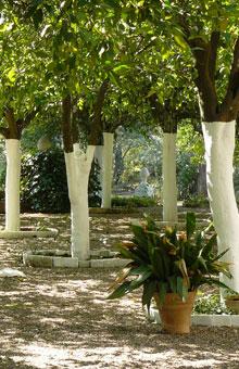 Jardin naranjos